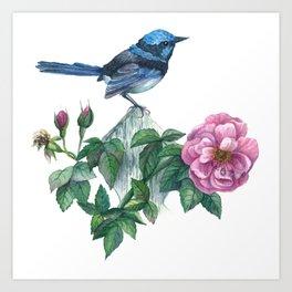 Blue Wren&Rose Art Print