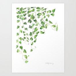 Golden Pothos - Ivy Art Print