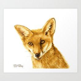 Mr Red Fox Art Print