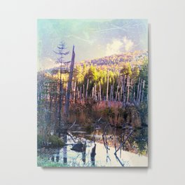 Inside the North Woods of Maine Metal Print