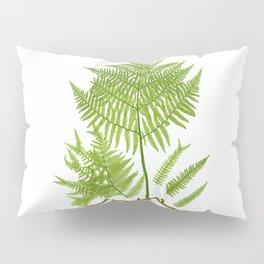 Pteridium aquilinum  byThomas Moore Pillow Sham