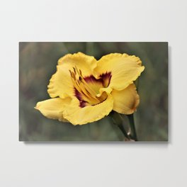 Summer Lily Metal Print