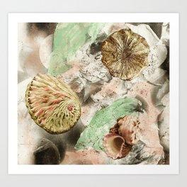 Shell Art Print