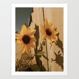 Sunflower pair Art Print