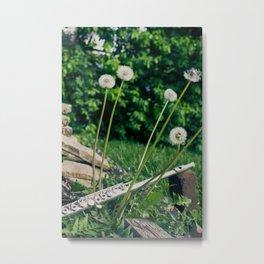 Wishing Flower Melody Metal Print