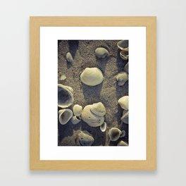 Seashells By the Seashore  Framed Art Print