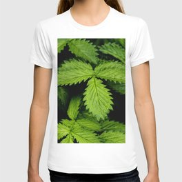 Green leaves of Agrimonia Procera - close up T-shirt