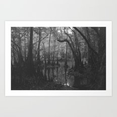 Florida Swamp Art Print