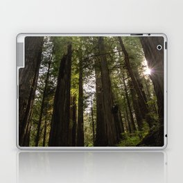 Redwoods Make Me Smile - Nature Photography Laptop & iPad Skin