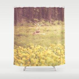 Resting Elk // Estes Park, CO Shower Curtain