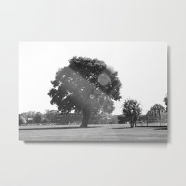 Tree in the Sun Metal Print