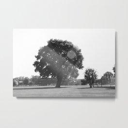 Tree in the Sun Metal Print