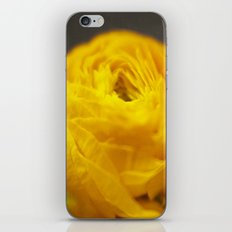 Golden Ranunculus Flowers iPhone & iPod Skin