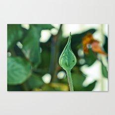 the Green Head Canvas Print