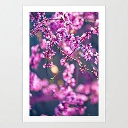 Spring has come 4 Art Print