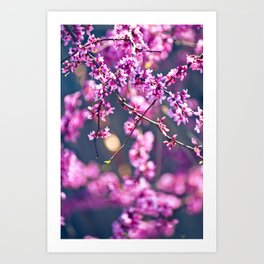 Spring has come 4 Art Print