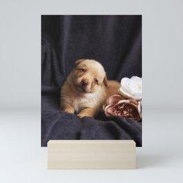 Australian kelpie puppy with rose Mini Art Print
