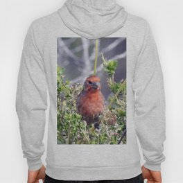 Handsome Male House Finch Hoody