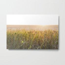 Bulrush filter Metal Print