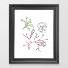 Seaweed and Lotus Root Framed Art Print