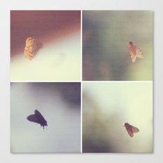 Moth Collage Canvas Print