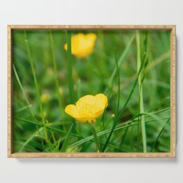 Yellow buttercup flower in summer Serving Tray