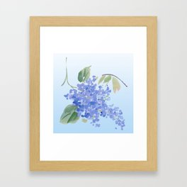 blue lilac Framed Art Print