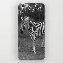 black and white zebra iPhone Skin