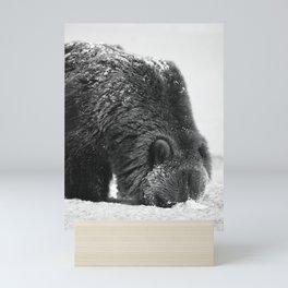 Alaskan Grizzly Bear in Snow, B & W - 2 Mini Art Print