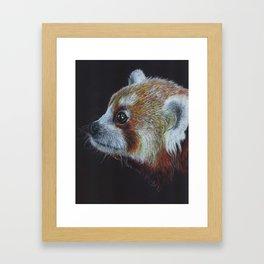 Red Panda Colored Pencil Drawing Framed Art Print
