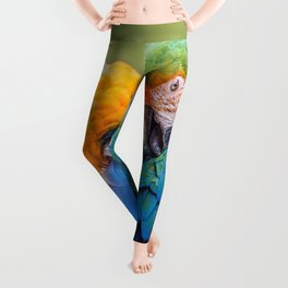 Birds Parrot Species Show Love Leggings