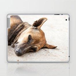 street dog Laptop & iPad Skin