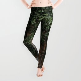 GLASS WINDOW SURROUNDED BY GREEN LEAFED PLANTS Leggings