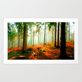 This forest feels like home Art Print