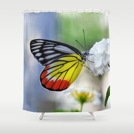 Asian Painted Jezebel butterfly Shower Curtain