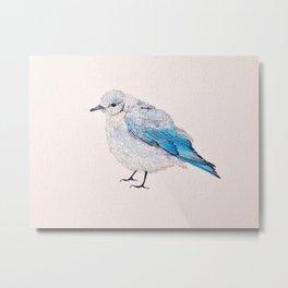 Birds: Bluebird Series | Mountain Bluebird Metal Print