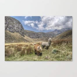 Alpacas Canvas Print