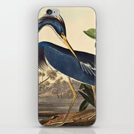 John James Audubon - Louisiana Heron iPhone Skin