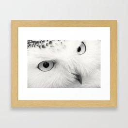 owl chouette bird white Framed Art Print
