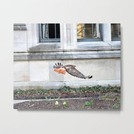 Floating urban hawk 12 Metal Print