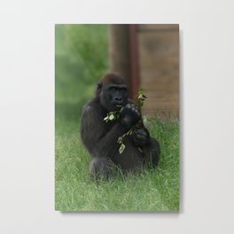 Cheeky Gorilla Lope Metal Print