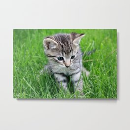 Cute young kitten sitting in green grass Metal Print
