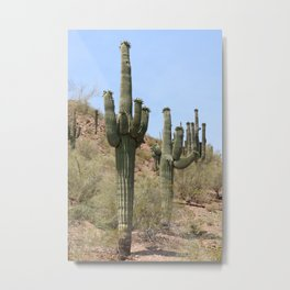 A Cacti in the Desert Metal Print