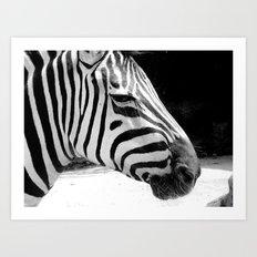 b&w zebra Art Print
