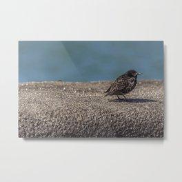 Birdy. Metal Print