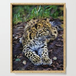 Endangered Amur Leopard Cub by Reay of Light Serving Tray
