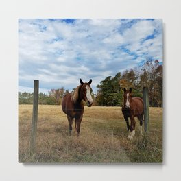 Two Horse Amigos in Pasture Metal Print