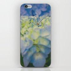 Granddaddy sleeping in the blue hydrangea iPhone & iPod Skin