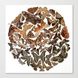 Moth circle Canvas Print