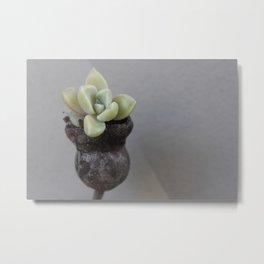 MJC Gumnut Succulent  Metal Print